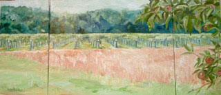Vineyards-on-the-Scuppernong-River